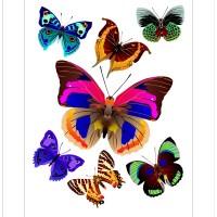 Стикери A&G 65x85 см, 1ч., пеперуди