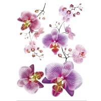 Стикер 65х85 Орхидея виолет